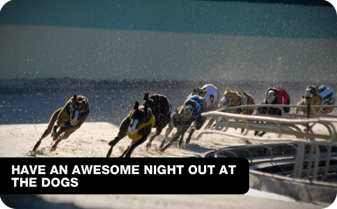 Have an awesome Night out at The Dogs